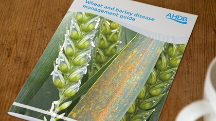 Wheat and barley disease management guide