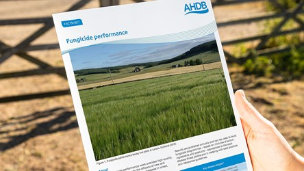 Fungicide performance in cereals and oilseed rape