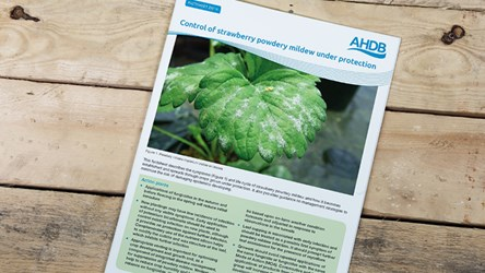 Control of strawberry powdery mildew under protection