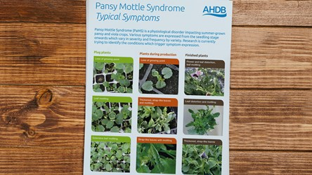 Typical symptoms of Pansy Mottle Syndrome