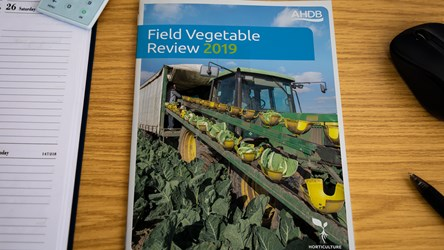 Field Vegetable Review 2019