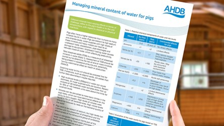 Managing mineral content of water for pigs