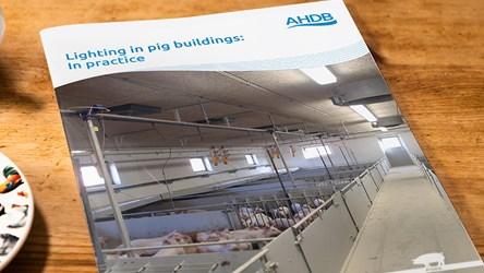 Lighting in pig buildings: In practice