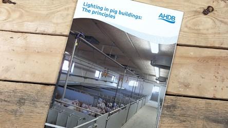 Lighting in pig buildings: The principles