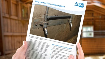 Deep cleaning farm drinking systems (factsheet)