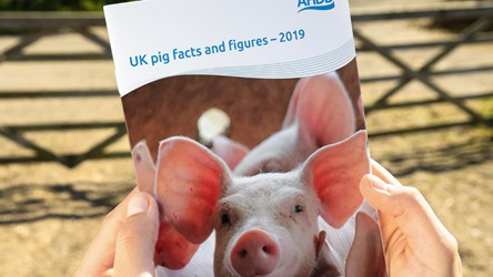 UK pig facts and figures – 2019