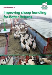 Improving sheep handling for Better Returns