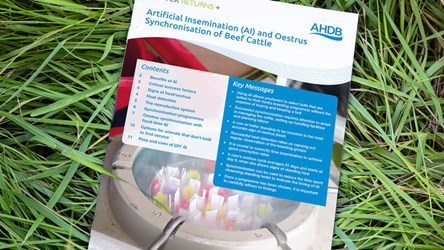 BRP+ Artificial Insemination (AI) and Oestrus Synchronisation of Beef Cattle
