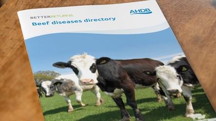Beef diseases directory