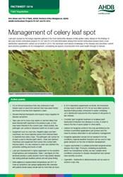 Celery leaf spot