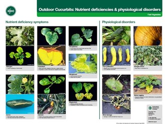 Outdoor Cucurbits: Nutrient Deficiencies & Physiological Disorders