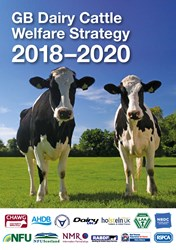 Dairy Cow Welfare Strategy