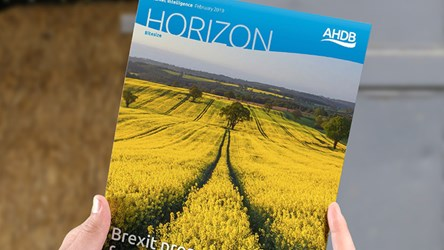 Brexit prospects for UK cereals and oilseeds trade
