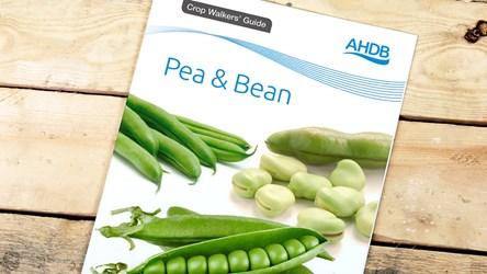 Peas and bean crop walkers' guide