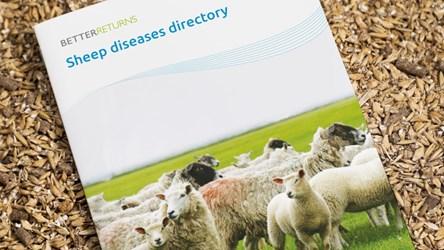Sheep Diseases Directory