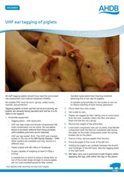 UHF Ear Tagging of Piglets