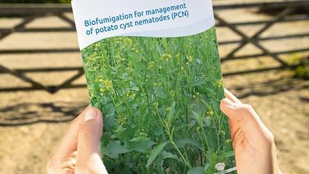 Biofumigation for management of potato cyst nematodes (PCN)