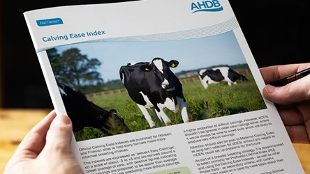 Calving Ease Index