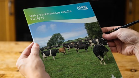 Dairy performance results 2018/19