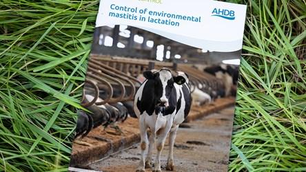 Control of environmental mastitis in lactation