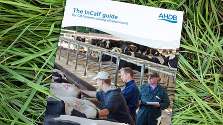 The InCalf guide for GB farmers calving all-year-round