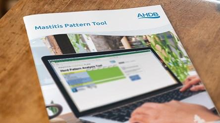 Mastitis Pattern Tool