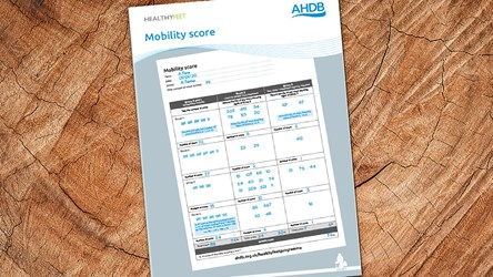 Mobility score pad