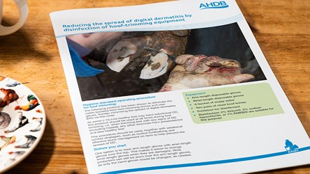 Reducing the spread of digital dermatitis by disinfection of hoof-trimming equipment