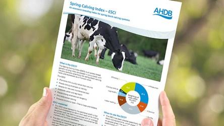 Spring Calving Index (£SCI)