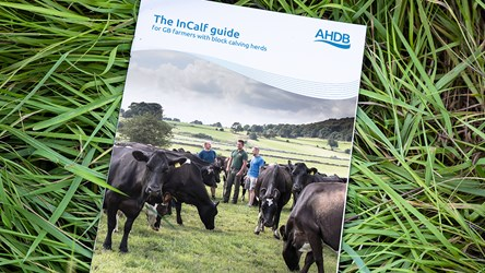 The InCalf guide for GB farmers with block calving herds