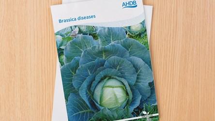 Brassica Diseases' Guide