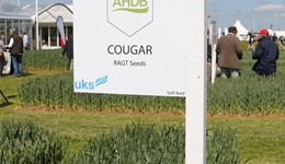 Unexpected septoria levels in the winter wheat variety Cougar a 'one-off'